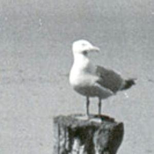Profile picture for Lame De Son