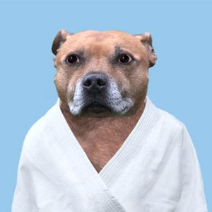 Profile picture for Dog Judo