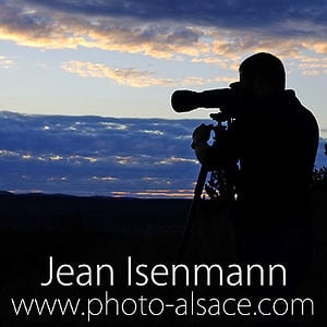 Profile picture for Jean Isenmann