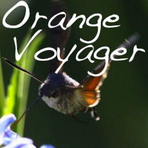 Profile picture for Orangevoyager