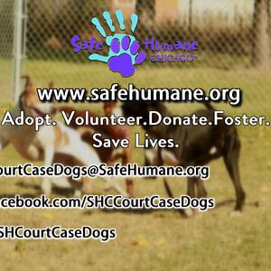 Profile picture for Safe Humane Chicago