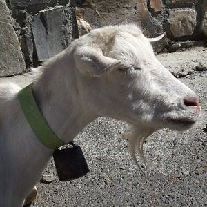Profile picture for Dazzler