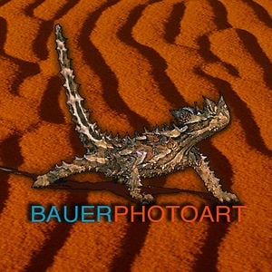 Profile picture for BAUER PHOTO ART