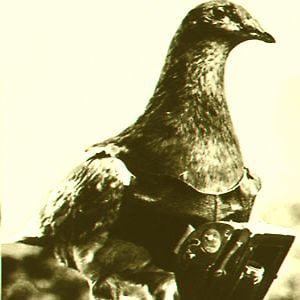 Profile picture for Enrique Pigeonrenga