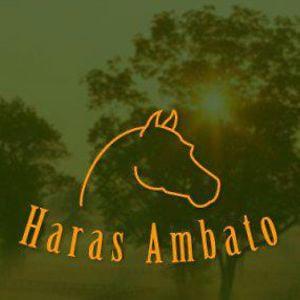 Profile picture for Haras Ambato