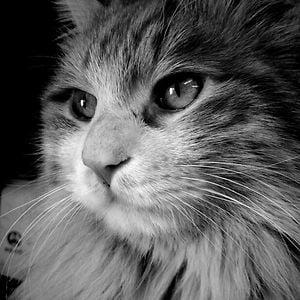 Profile picture for choco1221