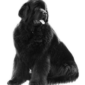 Profile picture for Camilla Folke