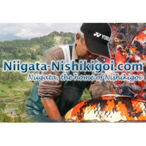 Profile picture for Niigata-Nishikigoi.com
