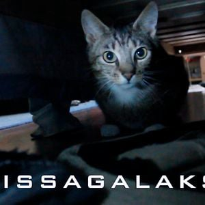 Profile picture for Kissagalaksi