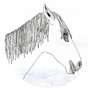 Profile picture for Pandahorse