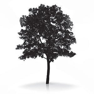 Profile picture for Truth About Trees