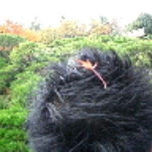 Profile picture for Jun Ohtani