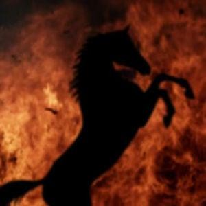 Profile picture for Arson Horse Films