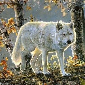 Profile picture for Lone Wolf Natureworks