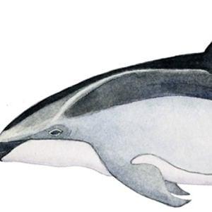 Profile picture for Perrin Ireland