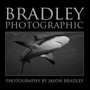Profile picture for Bradley Photographic