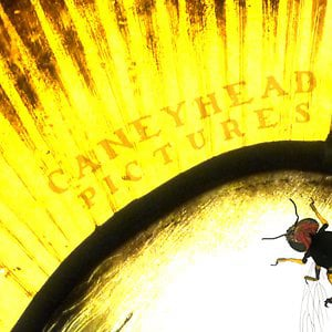 Profile picture for Caneyhead Pictures