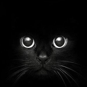 Profile picture for Felix Black