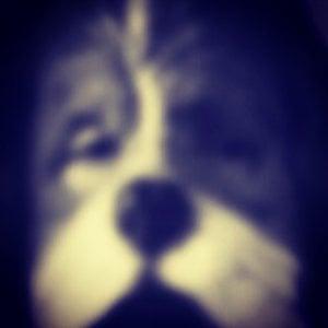 Profile picture for Ori Alboher