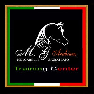Profile picture for MG Arabians