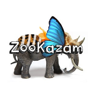Profile picture for ZooKazam