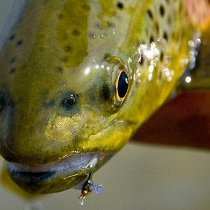 Profile picture for Catch Fly Fishing