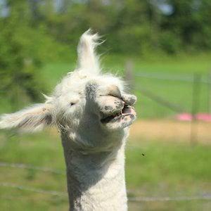 Profile picture for Jared Loperfido