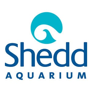 Profile picture for Shedd Aquarium Video Library
