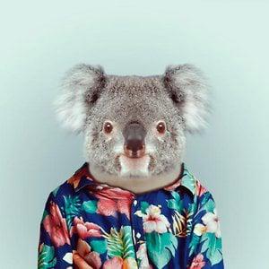 Profile picture for Koala
