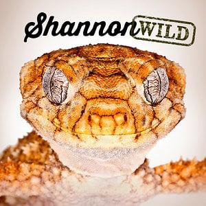Profile picture for Shannon Wild