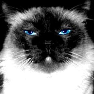 Profile picture for Liviu B