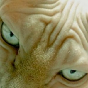 Profile picture for Sphynxlair