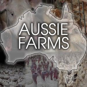 Profile picture for Aussie Farms