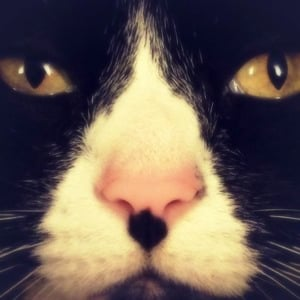 Profile picture for Nettie