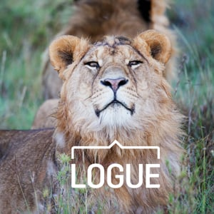 Profile picture for Logue