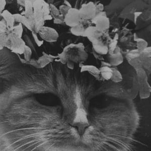 Profile picture for Juliettove
