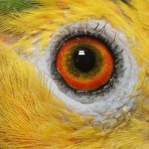 Profile picture for sykaruga