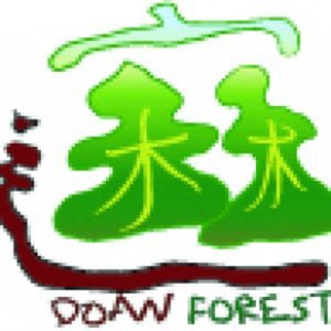 Profile picture for DoAn Forest