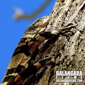 Profile picture for Balangara Films