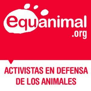 Profile picture for Equanimal