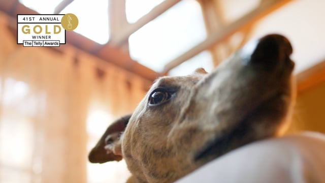 Adopt a Retired Racer – Nonprofit – 30