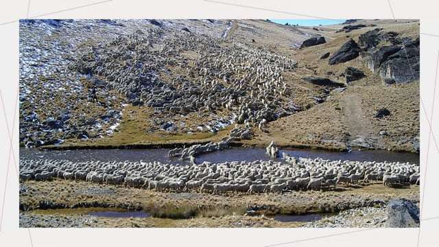 U3A High Country Merino Operation - Alastair Campbell