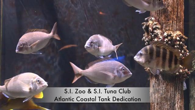 S.I. Zoo & S.I. Tuna Club Atlantic Coastal Tank Dedication