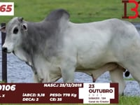 Lote 65