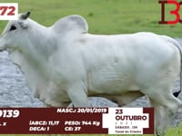 Lote 72