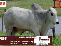 Lote 86