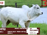 Lote 113