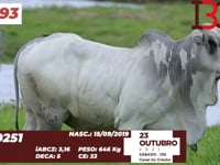 Lote 93