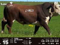 Lote 15 - D 013