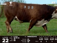 Lote 22 - R 323